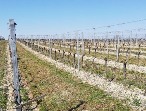 Weineinkauf und Weinlieferungen